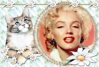 Fotomontage, um das Foto mit einem niedlichen Kätzchen setzen.