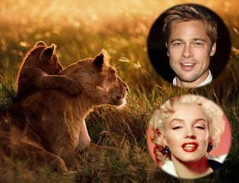 Collage von zwei Fotos mit einer Löwin und ihr Junges.