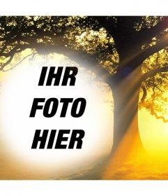 Bearbeiten Sie diese Foto-Collage von einem Sonnenuntergang mit einem Baum Ihr Foto kostenlos