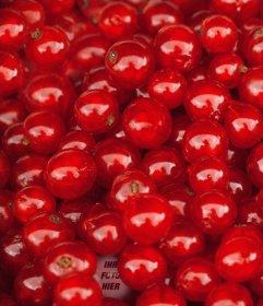 Stellen Sie eine rote Kirschen, um das Foto zu finden