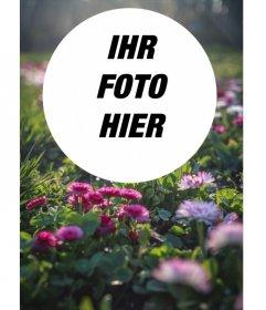 Feld der Blumen und Gras in der Sonne mit einem kreisförmigen Rahmen für Ihre Fotos