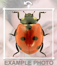 Fotomontage, ein Marienkäfer auf Ihre Fotos setzen