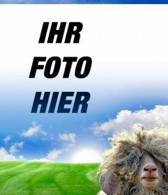 Fotomontage mit einem Schaf und einer grünen Wiese Hintergrund