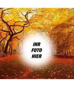 Herbstliche Landschaft eines Parks, wo Sie Ihr Foto kostenlos