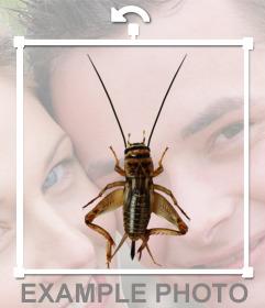 bumper insekt mit langen f hlern und beinen um ihre fotos. Black Bedroom Furniture Sets. Home Design Ideas
