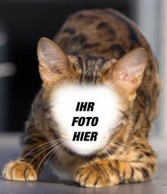 Fotomontage einer Wildkatze Ihr Gesicht zu setzen und eine Hybrid-Katzen-