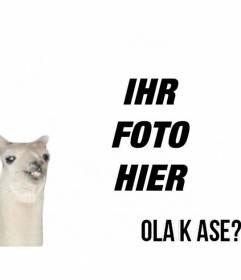 """Erstellen Sie eine Fotomontage einfach mit Flamme meme """"Ola k ase?"""" und fügen Sie Text kostenlos online"""