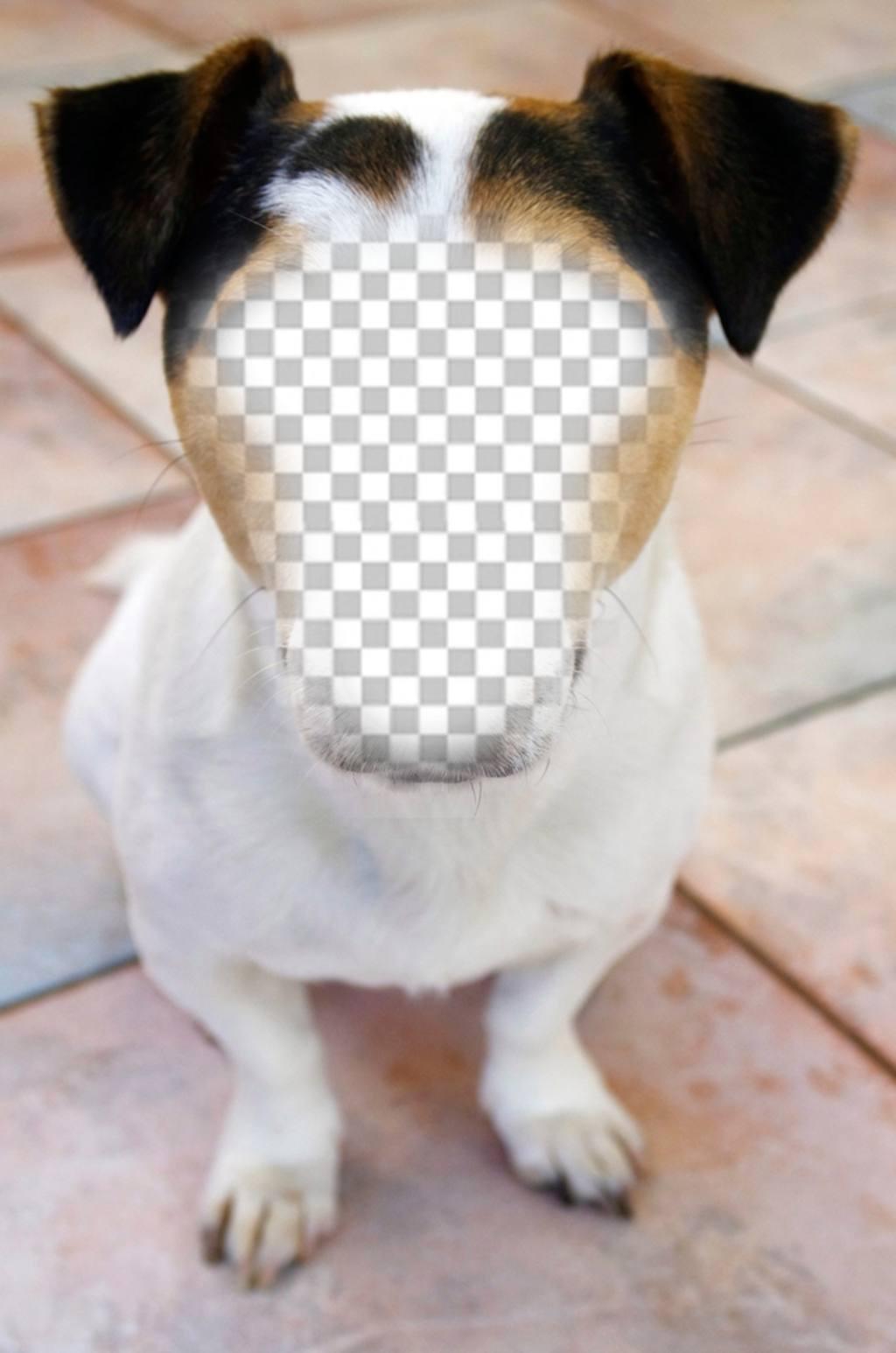 Fotomontage eines Hundes, wo Sie Ihr Gesicht und kostenlos