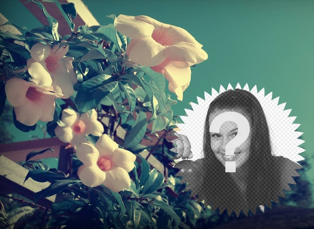 Foto-Collage mit Feder Schneeglöckchen Blumen auf dem Feld