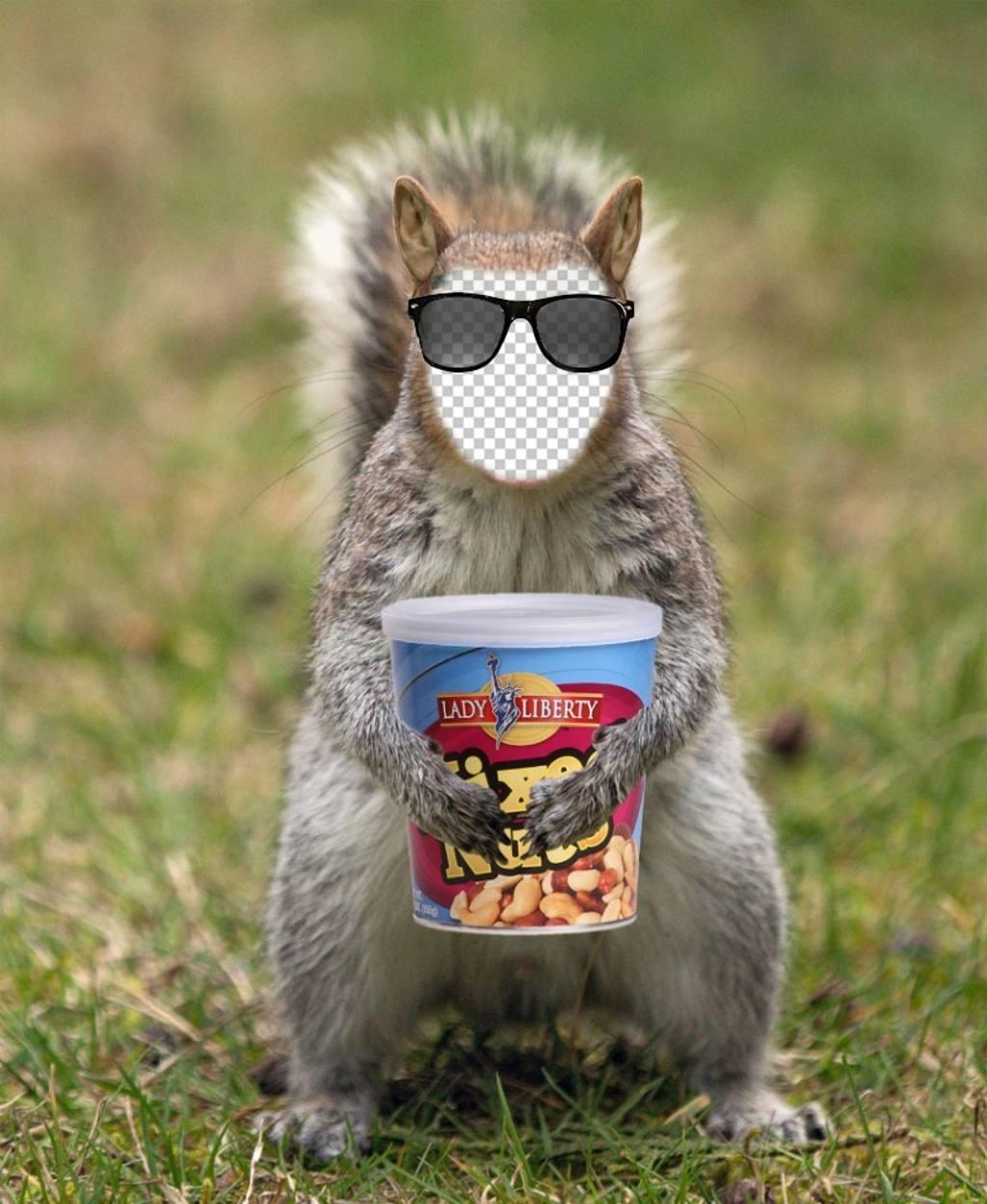 Setzen Sie Ihr Gesicht in ein Eichhörnchen mit einer Hipster Sonnenbrillen und eine Dose Erdnüsse