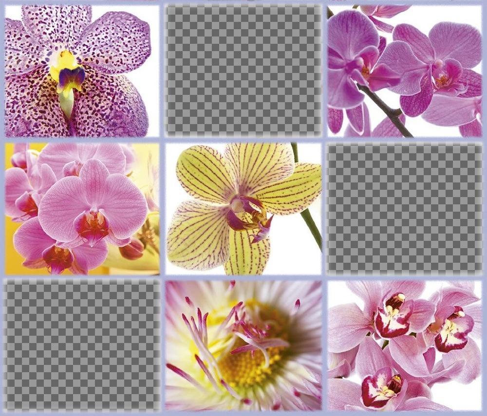 Freie Collage mit schönen Blumen drei Ihrer Fotos hinzufügen Editierbare Fotoeffekt