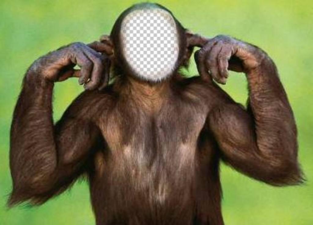 Fotomontage von Affen, die nicht mit Ihrem Foto